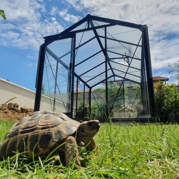 R205 Rétro : Serre de jardin en verre ACD, 8,61 m²